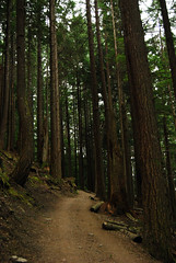 Up the Busy Trail (Sotosoroto) Tags: forest washington hiking tigermountain dayhike