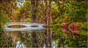 Magnolia Gardens (jeannie'spix) Tags: gardens charleston magnoliagardens