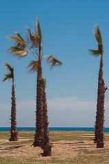 (joyrex) Tags: sky tree beach spain palm palmtree deserted spanje strans cataloni