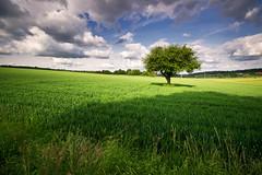 on a may day (Dennis_F) Tags: blue light summer sky tree colors field grass clouds contrast germany deutschland licht spring colorful sommer feld himmel wolken blau sonne kontrast baum blauerhimmel blauer farben frhling summerfield summerday grner