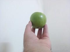 Green Apple on fingertips in the air (Ahmed AlHallak) Tags: green apple stem hand finger air tip half sliced stalk fingertips fingertip