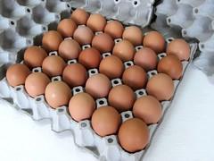 แผงไข่กระดาษ ถาดไข่กระดาษ pulp mold eggtray-3