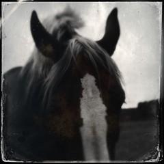 Stella-plage, 16 juin ((vincent desjardins)) Tags: horse caballo cheval sansflash hipstamatic objectiftinto1884 filmdtypeplate