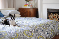 dogs bedroom pattern rip small barrel wrong oops choice tight crate duvet mismatch suge fail biggie