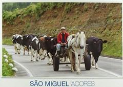 Rural life in Sete Cidades (caijsa's postcards) Tags: portugal islands traditions domesticanimals