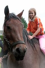 DSC_5136 (Ton van der Weerden) Tags: horses horse de cheval nederlands belges draft chevaux belgisch trait gemert trekpaard trekpaarden fokpaardendag flavievandenhoorn