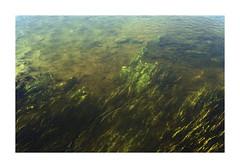 Pelicula (Stefan Botnari) Tags: plant green film nature water beautiful 35mm canon dark mood kodak 200 mk2 pelicula kit selfdeveloped c41 colorplus tetenal 9000f
