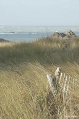 Tombolo (Helleu.D) Tags: saint dune coulomb chevrets