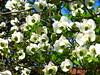 UN FIORE SCONOSCIUTO a CASIER (aldofurlanetto) Tags: fiore giardino sconosciuto casier