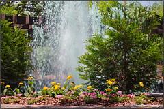 Fountain in the Sun Again (ChristianRock) Tags: flowers nature 50mm pentax manual ricoh manualfocus 50mmf14 rikenon ricoh50mmf14 kmount rikenon50mmf14 k20d pentaxk20d rikenonxr50mmf14