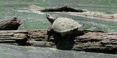 Prehistoric (Keith Michael NYC (4 Million+ Views)) Tags: nyc ny newyork si statenisland mountlorettouniquearea