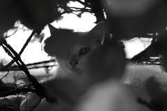 Street cat #177 (crossroadk12) Tags: canon eos 5d markii ef24105mm f4l