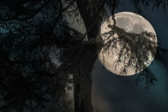 Semioculta (seguicollar) Tags: luna rbol ramas hojas semioculta cielo noche nocturno paisaje virginiasegu imagencreativa photomanipulacin artedigital arte art artecreativo airelibre
