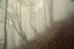 21 Dry Mountain Fog (kana movana) Tags: dry mountain serbia balkan forest tree fog foggy weather fall autumn mountaineering walk tracking nature outdoor travel journey climbing d90