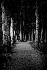 Der dunkle Pfad (edelweisskoenig) Tags: eu europe europa deutschland germany bavaria bayern allgu kaufbeuren fujifilm xpro1 fujinon 35mm 35mmf2 blackandwhite blackwhite bw noireblanc schwarzweiss monochrome monochrom path pfad dark dunkel