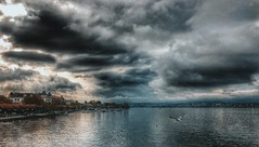 The Lake (FlavioSarescia) Tags: iphone nature landscape lake zrich zurich sun clouds sky bird mwe fly water see wasser schweiz suisse switzerland city architecture sunshine sunray sunbeam skyporn