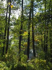 Herbst macht Fortschritte-bw_20161006_060048.jpg (Barbara Walzer) Tags: 071016 blätter bunt bäume farbe herbst natur wald blã¤tter bã¤ume