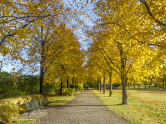 Enjoying the Fall Colors on Djurgrden (PriscillaBurcher) Tags: autumn fall stockholm djurgrden l1000560