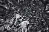 (oliurrahmanpritom) Tags: padma lens lights lightroom light landscape lifestyle world worldbest workingpeople explore excellent exploring 3556 exposure travel transportation texture street eye fotografie story foto fotographe nature tree bangladesh beautiful best bw black view moments moment man xplorstarts snap scout shadow sunlight addexplore flicker flickriver fine horse human love bond