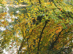 when worlds collide (mark.griffin52) Tags: olympusem5 england buckinghamshire stowepark water lake beech tree reflection autumn leaves