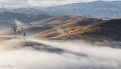 Foggy Of Livermore (katiewong511) Tags: brushypeakregionalpreserve regionalpark eastbay park livermore recreation california sanfrancisco bayarea lowfog fog morning rollinghills windmills fall