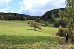 IMG_7228 (hudsonleipzig80) Tags: schwarzwald blackforest natur nature outdoor badenwrtemberg autumn herbst fall tree baum bume prechtal oberprechtal trekking wandern mountains mountain canon canoneos1200d eos1200d eos 1200d