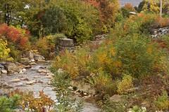 Upper Mill Creek (2bmolar) Tags: schuylkillcounty fallfoliage