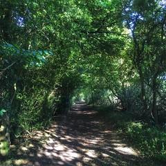 shady path (mistdog) Tags: ifttt dropbox path bridleway trees hedges sunlight photogene