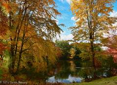 Painting by the lake (Doreen Bequary) Tags: connecticut fallfoliage fall autumn automne d500 pond painting leaves yellow tree foliage