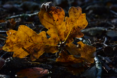 Autumn leaves (LidyvN) Tags: autumn icm movement green yellow brown wood tree orange red season nature forest leaf leaves