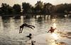 Zambullida (Nebelkuss) Tags: india khajuraho lago lake contraluz counterlight momentos moment ladrondemomentos instantes instant instantsthieve elzoohumano thehumanzoo fujixt1 fujinonxf23f14 quierosercomostevemccurry iwannabelikestevemccurry