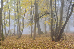 "They call it ""Park""! (:Linda:) Tags: germany thuringia town hildburghausen park tree mist leaf autumnalleaf"