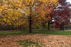 Second Spring (CVerwaal) Tags: autumn centralpark greatlawn trees newyork ny usa sonyrx100iii