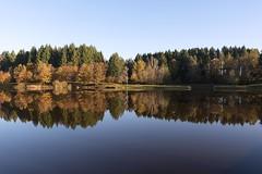 0432 Perfect reflection (Hrvoje Simich - gaZZda) Tags: reflection forest trees yellow green orange blue sunrise light borovik croatia nikon nikond750 sigmaart2414 gazzda hrvojesimich