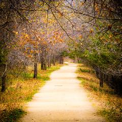 Canopy (Daniel-Godin) Tags: afton aftonstatepark canon canon7dii canopy capturemn captureminnesota danielgodinphotography dirt exploremn mn minnesota nature path secluded sigma sigma150600mm stateparks trees