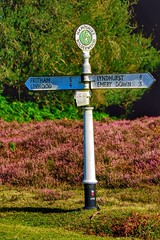 Directions (Nick Fewings 4.5 Million Views) Tags: road nature purple heather digits numbers mile mileage hampshire newforest bolderwood nickfewings sign signage signpost directions flickr