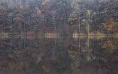 Autumn at the lake 2 (derkleinebiber) Tags: trees forest wald wlder see seenlandschaft ufer wood woods woodland reflection autumn autumnal herbst landscape naturpark nature lake lakeside tornowsee buckow mrkische schweiz brandenburg
