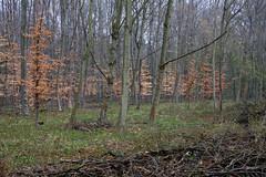 ckuchem-0242 (christine_kuchem) Tags: asthaufen baumrinde blätter bäume frühjahr frühling frühlingsanemone hainbuche jungpflanze laub laubbäume laubwald pflanzen reisighaufen schutz tiere unterschlupf wald wildtiere winter winterschlaf jung äste