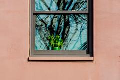 Not Odd to see,around Town.. (Omygodtom) Tags: pot window green weired weed nikon natural d7100 art garden nikon70300mmvrlens street portland oregon