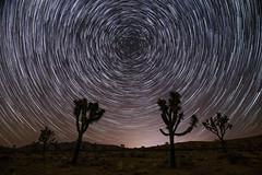 Joshua Tree Star Trails (Joe Parks) Tags: joshuatree stars startrails northstar trails star nationalpark sigmaart sigmaart24 starstax california nightsky canon6d parksjd joeparks jtree joshua tree