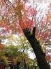 IMG_1050 (forestgreendog) Tags: 2016 autumn canonpowershots90 compactdigitalcamera digital treewoodforest 松戸