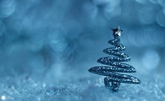 Simply Christmas (Trayc99) Tags: christmas magic sparkle tree glitter bokeh delicate blue pastel closeup pretty beautiful star beautyinmacro