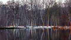 Winter Reflections (Bob's Digital Eye) Tags: bobsdigitaleye canon canonefs55250mmf456isstm flicker flickr lakescape landscape outdoor reflections rural snow t3i tree trees water winter winterinmn wow