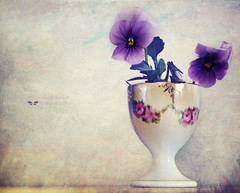 count your blessings (silviaON) Tags: flower april viola textured 2012 stiefmütterchen memoriesbook bsactions oracope flypapertextures alledgesactions