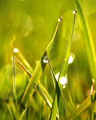 Lawn Jewels