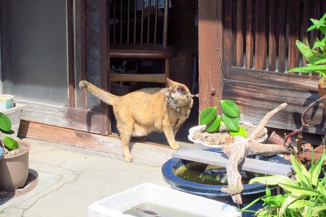Today's Cat@2012-05-06