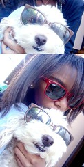 Sunglasses (facebook.com/KassiaFelixCreations) Tags: toby dog co glasses cachorro poodle culos