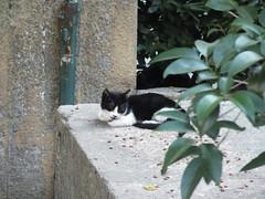 Folti (CyberMacs) Tags: cute nature animal cat turkey mammal crazy trkiye kitty places istanbul trkorszg kedi constantinople valogatni