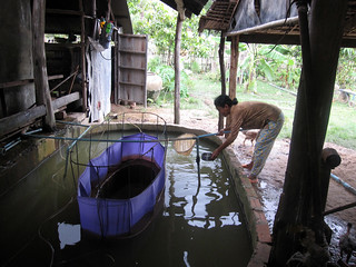 A small-scale fish hatchery, Takeo, Cambodia. Photo by Jharendu Pant, 2009.