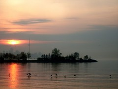 Cormorant Crossing (Georgie_grrl) Tags: morning sky ontario beautiful birds clouds sunrise cormorants cntower flock silhouettes lovely cans2s mydarkpinkside samsungd760 norriscrescentparkette ontheirmorningcormute robsfault humberbayarea